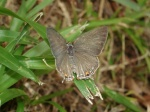 View the album E-6 Hairstreaks & Blues Lycaenidae